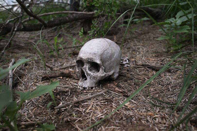 The skull of a suspected undocumented immigrant lies where it was found by the U.S. Border Patrol on a ranch on May 22, 2013 in Falfurrias, Brooks County, Texas.