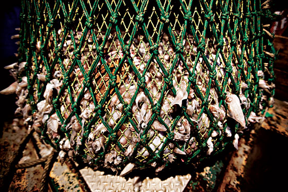 The full cod end of a fishnet, Shinnecock Inlet, Long Island, June 2011 | Credit: BENJAMIN LOWY
