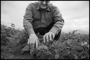 Fausto Limon looks at his bean plants, knowing they need more fertilizer, but lacking the money to buy it. | Credit: DAVID BACON