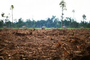 A clear-cut forest in Riau province, Indonesia | Credit: DAVID GILBERT/RAINFOREST ACTION NETWORK