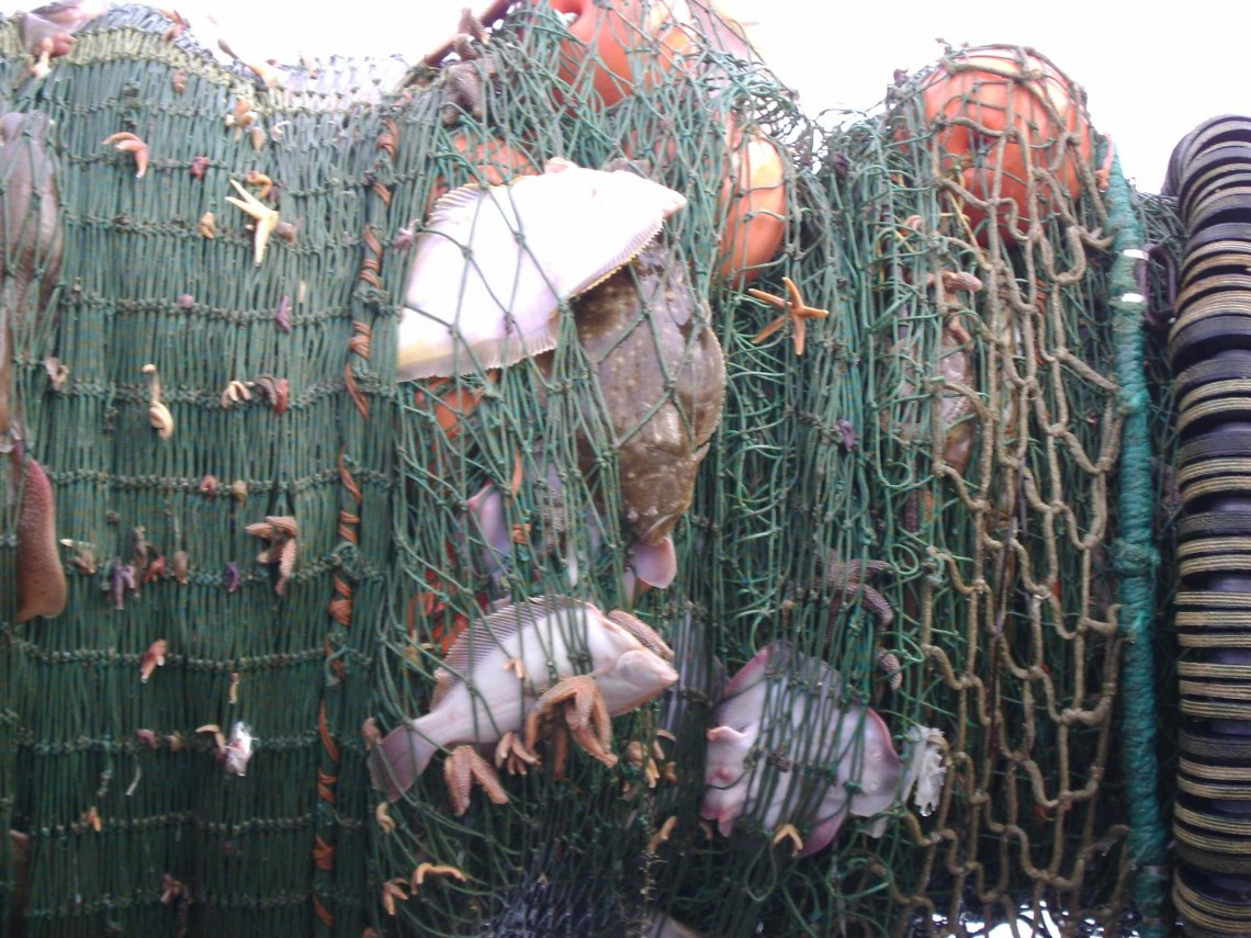 Flounder and other bycatch | Credit: TOM GOGOLA