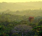 Yasuni National Park is rich in plant and animal species.   Credit: KELLY HEARN