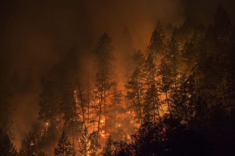 Wildfire creeps through the forest, down the south side of Dry Creek Canyon, west of Napa, California on October 12, 2017.
